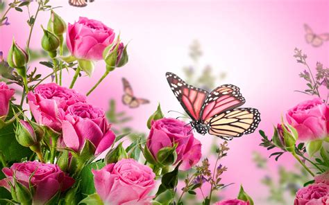 imagenes flores mariposas rosas rosadas flores mariposas fondos de pantalla