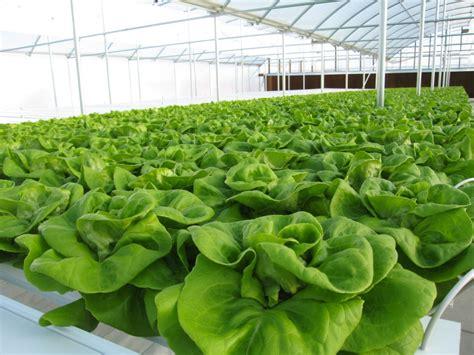 Hydroponics Garden by Hydroponic Gardening In The Greenhouse Interior Design
