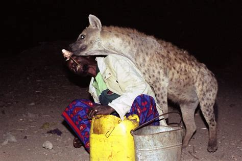Draw Plans the quot hyena men quot of harar hand feed wild hyenas every night