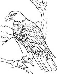 bald eagle color sheet bald eagle coloring page for free printable picture