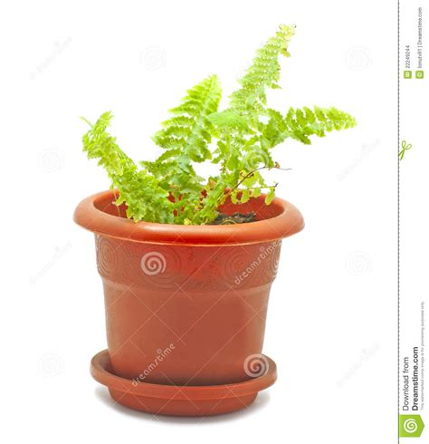 tiny potted plants small potted plant stock images image 22249244