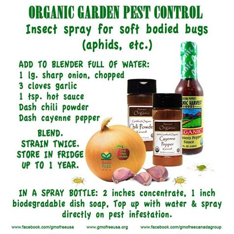 organic garden pest healthy recipes and - Organic Garden Pest Recipe