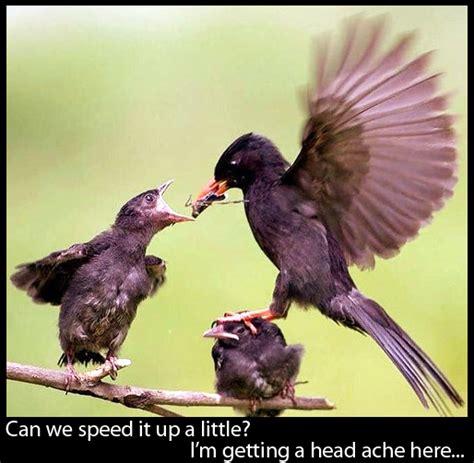 mama bird feeding time furry talk