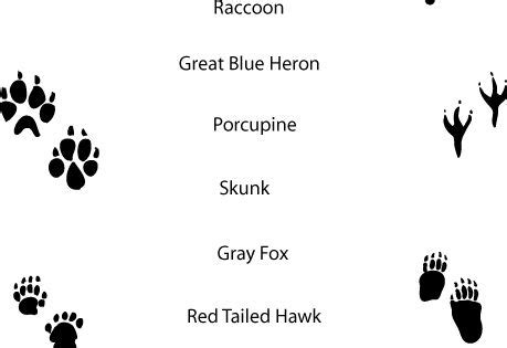 footprints 4 activity book 0230012213 match animal prints with written name activity printable on page cubscouts
