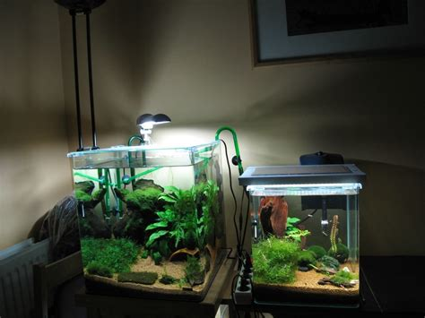 pin eclairage nano aquarium zolux nanolife silver 11w pour deau on