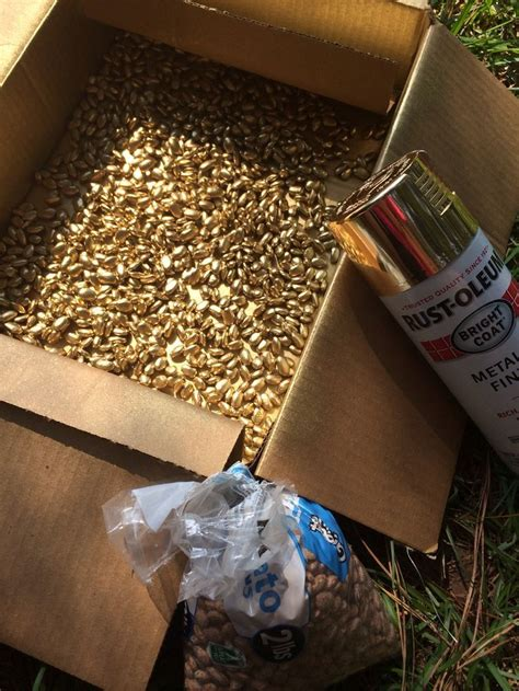 spray painter diy spray pinto beans with gold spray paint cheap vase filler