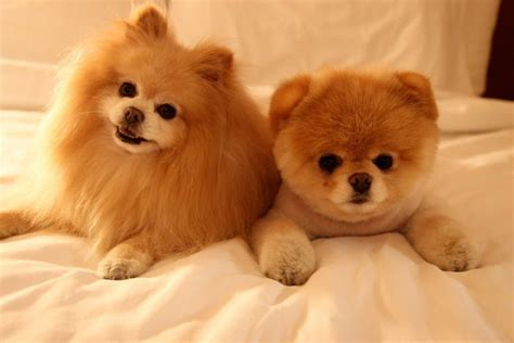 most adorable puppies image gallery most adorable puppies