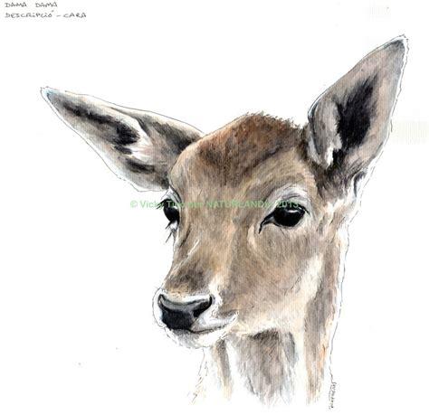 deer head fallow deer head by vickytico on deviantart