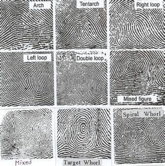 finger pattern meaning 32 best images about dermatoglyphics on pinterest your