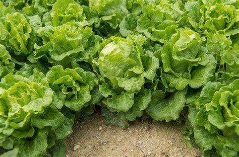 wann wird eurolotto gezogen salat 187 wann ist saison