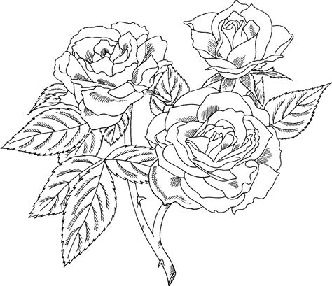 coloring pages of roses to print free printable roses coloring pages for kids