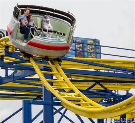Terbaru Mainan Roller Coaster Cars 1 ヤシの木に登って降りられなくなってしまったハスキー犬があまりにも切なすぎたのでコラ職人がんばる カラパイア