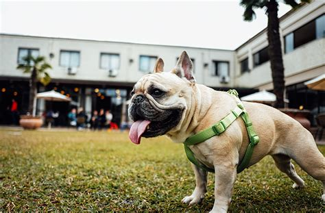 things to do with a puppy 50 things to do with your in sydney sydney the list