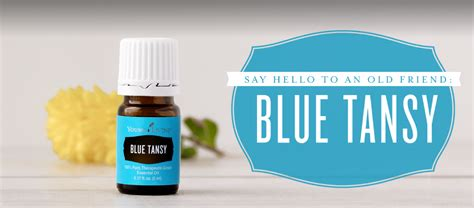 blue tansy essential 5ml or living essential oils