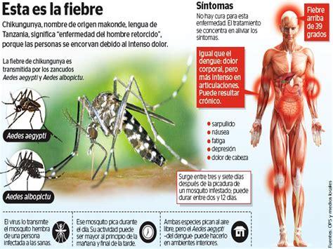 imagenes groseras sobre el chikungunya conoce todo sobre el virus de chikungunya en m 233 xico pulsodf