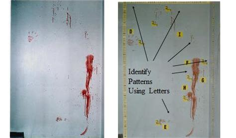 bloodstain pattern analysis job description bloodstain pattern analysis dps forensic services