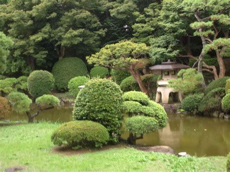 giardino zen piante contro zombi ci suggerisci consigli per coltivare un giardino zen with