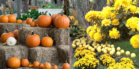 The Stone Barn Kennett Square Harvest Fun And Halloween In The Kennett Area Historic