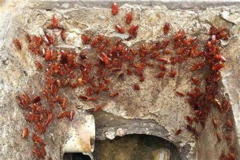 blatte volanti chi ha paura delle blatte sardegna sotterranea