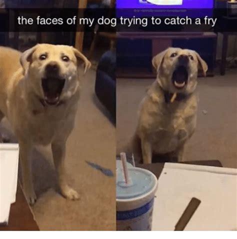 Puppy Face Meme - dank dog memes related keywords dank dog memes long tail