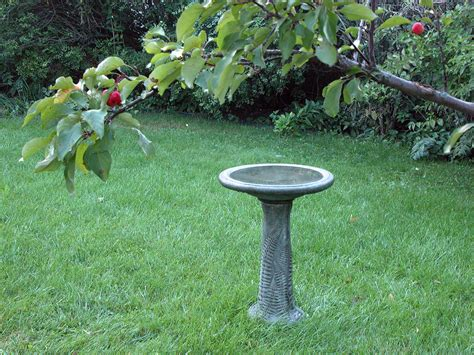 backyard bird baths birding backyard birds in racine wisconsin
