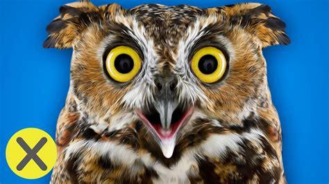 imagenes de animales furiosos 10 curiosidades animales youtube