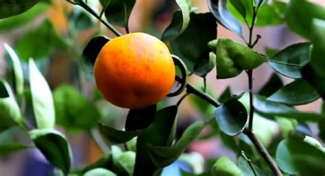 3 fruit types all types of fruit trees pictures to pin on