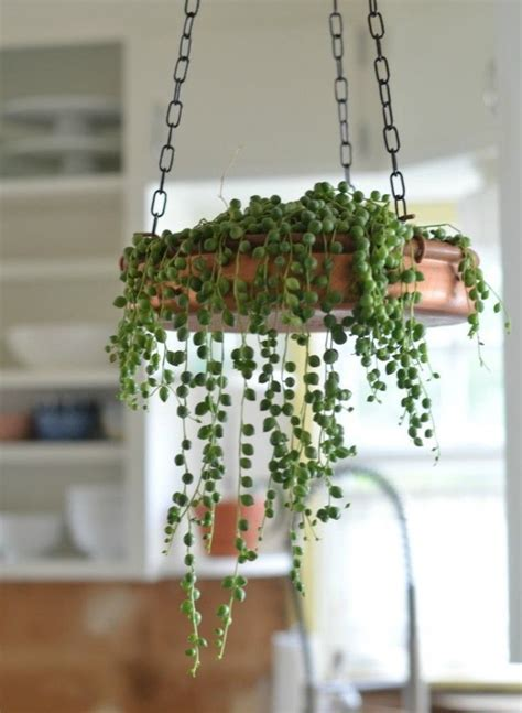 17 best ideas about hanging succulents on pinterest