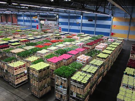 mercato dei fiori il mercato dei fiori di aalsmeer ripullulailfrangente