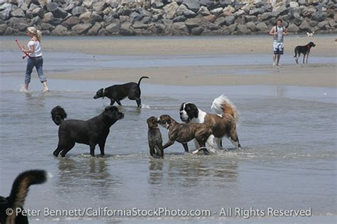 san diego puppies san diego california sd flickr photo