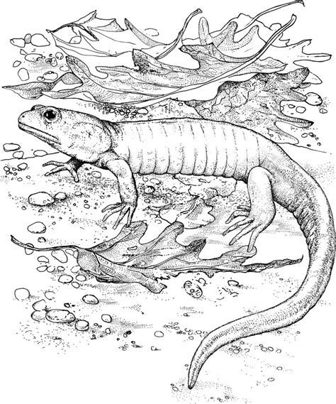 lizard coloring pages for adults free printable lizard coloring pages for kids adult