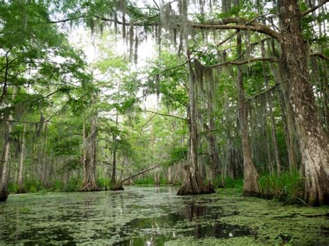 airboat sw tours near new orleans top 9 places to go hiking in new orleans
