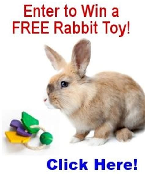 Rabbit Top Ml 51 best images about toys for rabbits on rabbit toys toys and activities