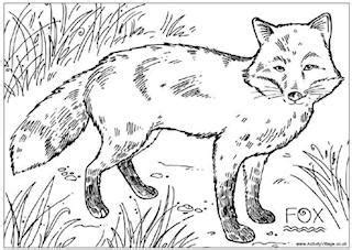 realistic fox coloring page foxes