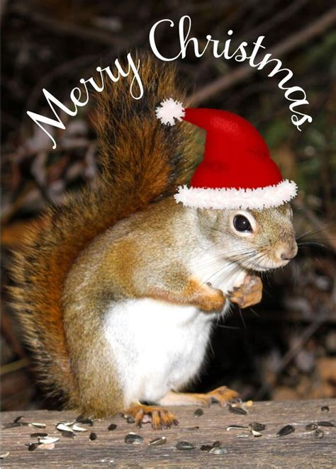 related image christmas squirrel squirrel funny