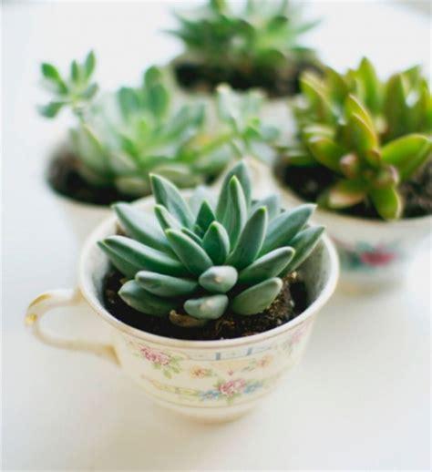 le pour plante zoom tendance d 233 co planter une plante dans une tasse ladecodekatia