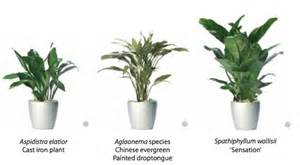 Houseplants For Low Light Areas by Rent Indoor Plants That Require Low Light From Ambius