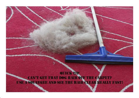 how do i get dog hair off my couch quick tip getting dog hair off your carpet fast my dog zone