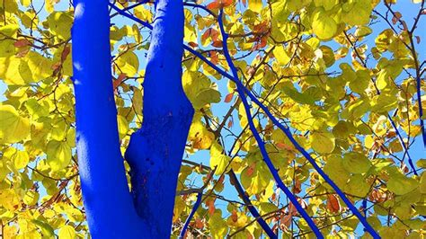love  trees paint  blue southern living