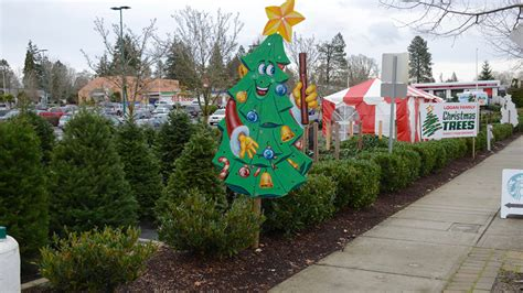 hich christmas tree smells the best ask the gardener which trees smell best last
