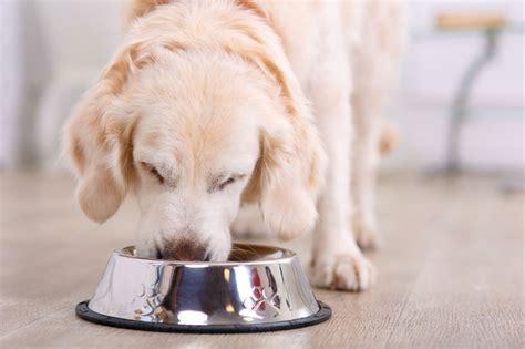 pet eat   dos  donts  human food