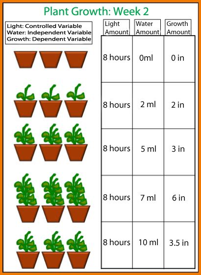 Amazon Cleaning by Plant Growth Chart Authorization Letter Pdf