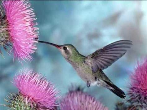 imagenes de flores bonitas para portada bonitas imagenes de aves y flores con musica para