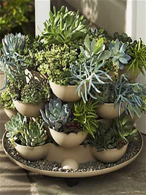 Cactus Garden Pot by Patio Porch Garden Planter With Cactus Eclectic