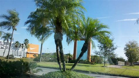 vacation village at parkway bed bugs saliendo del complejo picture of vacation village at