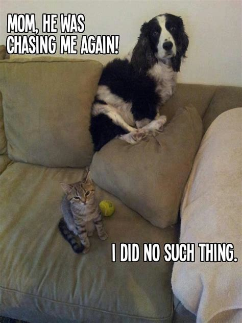 pictures of dogs and cats and cat jokes memes pictures