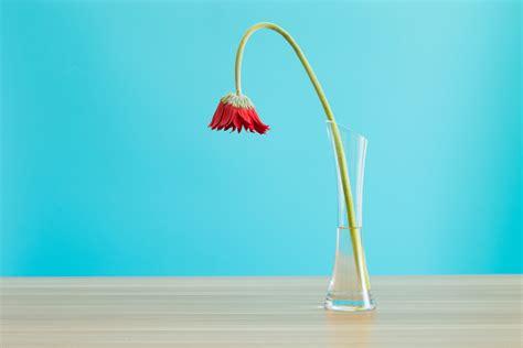 menghidupkan kembali bunga  layu
