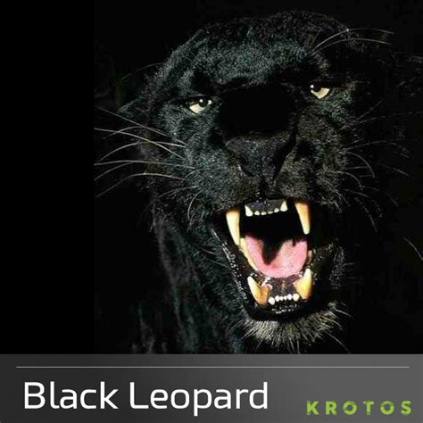 Black Leopard black leopard black leopard sound effects library