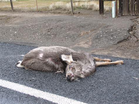 Road Kill by Roadkill Grab Bag