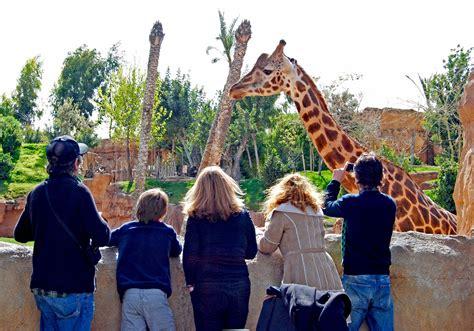 imagenes de jirafas en familia feliz cumplea 241 os a las jirafas del bioparc 171 blog de viajes